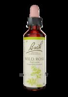 Fleurs De Bach® Original Wild Rose - 20 Ml à LE LAVANDOU
